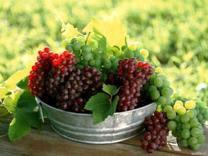 vino-organicheskoe-takoe-eto-interesno-poznavatelno-kartinki_82288564