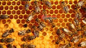 honeycomb_wide
