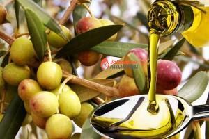 premii-olivkovoe-maslo