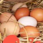 Белое или коричневое: есть ли отличия у куриных яиц разного цвета?