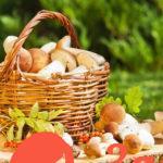 Готовим грибы: шесть базовых правил поваров