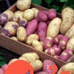 Картошка лежит до весны и не портится: секреты хранения